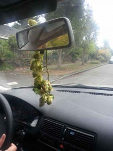 Hops-in-rearview-mirror