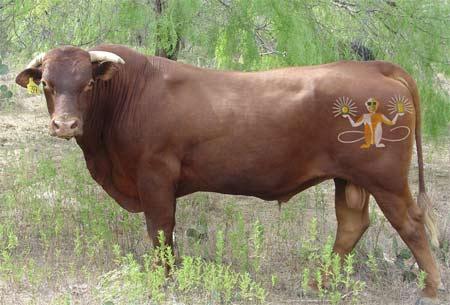 slacker_cow