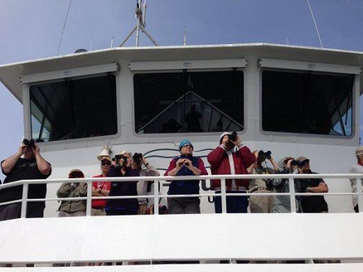 Spotting orcas off San Juan Island