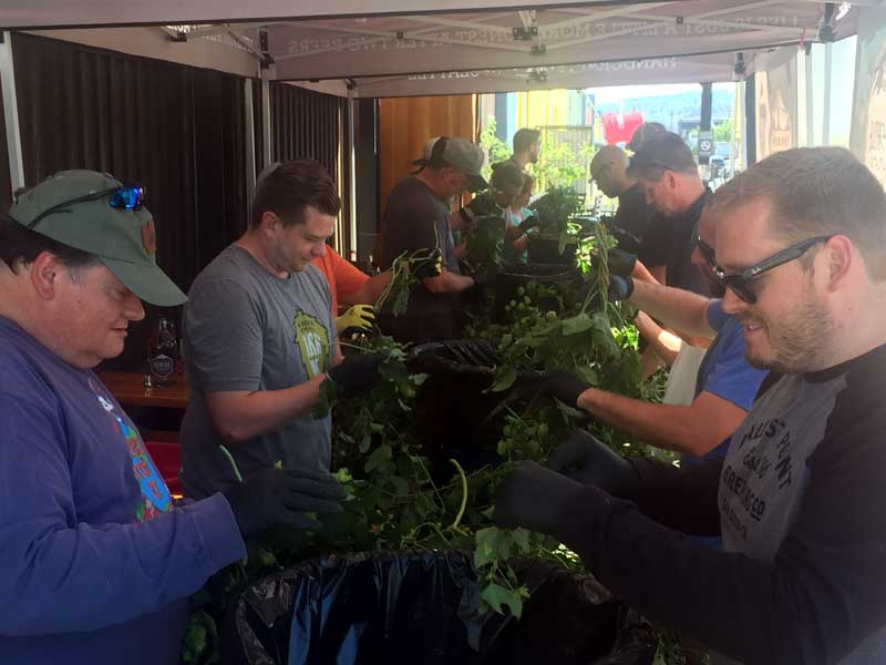 Fresh Hop Pickin' Party at Two Beers Brewing.