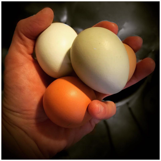 Farm-fresh eggs, Brewmaster's CSA box add-on.