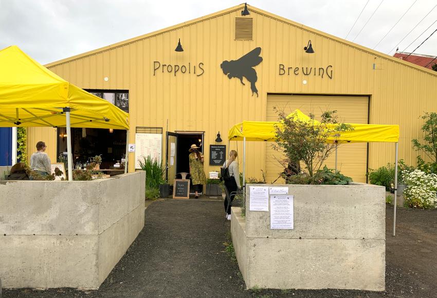 Propolis Brewing beer garden, Port Townsend, WA.